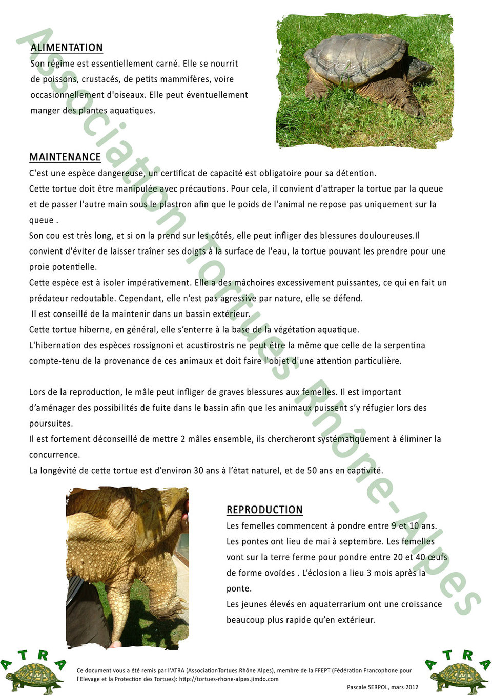 fiche-Chelydra-serpentina