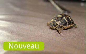 news-nouveausite-338x220